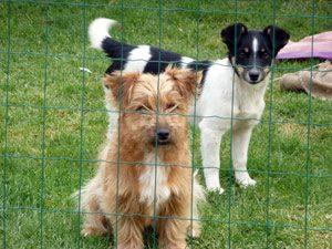 Casa Rural Navarra para mascotas: perros, caballos
