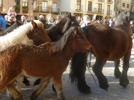 Feria de ganado San Andrés Estella